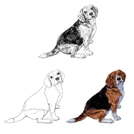 Beagle glance to it s side Stock Vector - 18291545