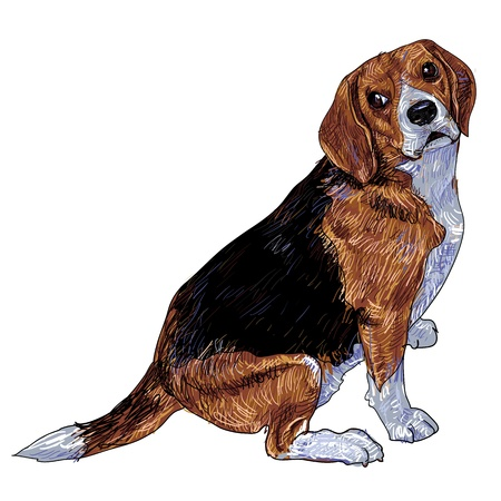 Beagle glance to it s side Stock Vector - 18291547
