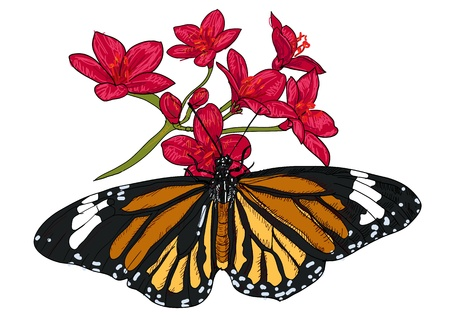 The butterfly is sucking nectar from flower  Vector