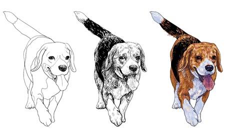 snuffelen: Running beagle
