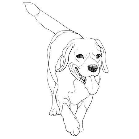 Running beagle Stock Vector - 18405855