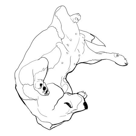 overturn: Beagle sta ponendo downon posa divertente