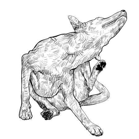 irritate: The dog is scratching itself