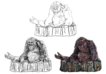 Gorilla sitting on big log  Vector