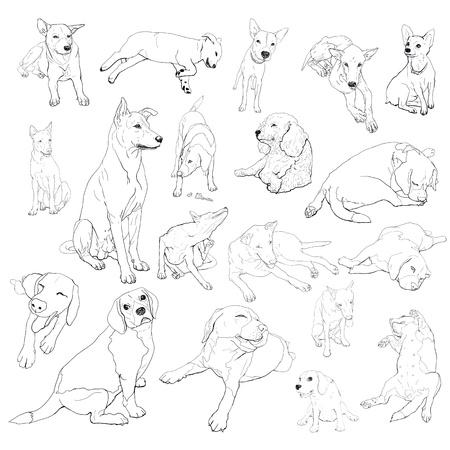 beagle puppy: Dibujo conjunto de perro en muchos plantean Vectores