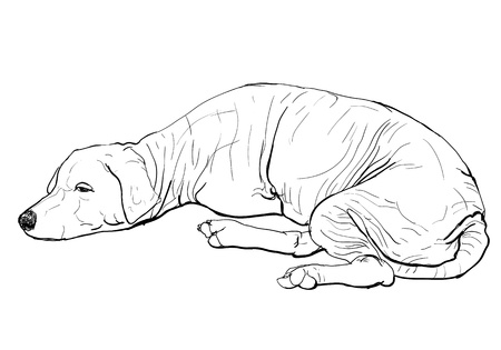 flabby: The pooring old mangy dog look sad and lonely
