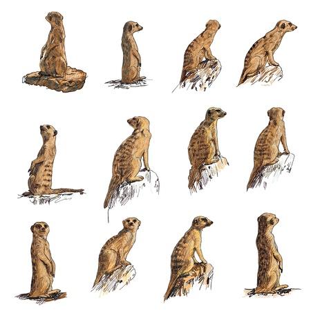 mangosta: El conjunto de vectores de suricata en muchas poses