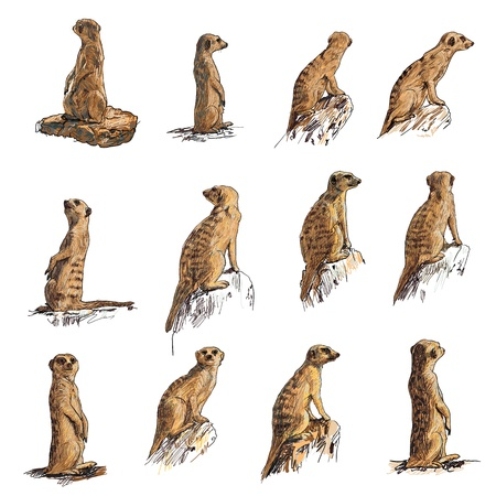 The vector set of meerkat in many poses Illustration