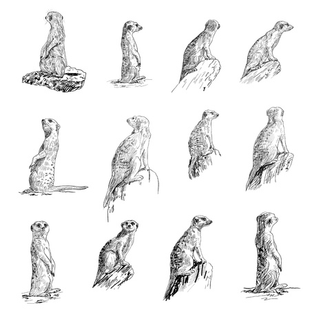 mongoose: The vector set of meerkat in many poses Illustration