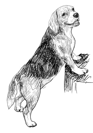 companions: Beagle using front leg standing on a log Illustration