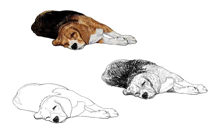 little dog: Beagle is laying down and almost fallen asleep  Illustration