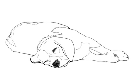 sniff: Beagle is laying down and almost fallen asleep  Illustration