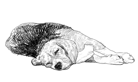 dog sleeping: Beagle is laying down and almost fallen asleep  Illustration