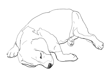 Beagle is sleeping in funny pose  Vector