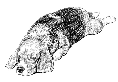 Beagle is laying down in keeping feet pose Vector