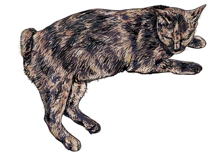 Short tail cat laying down and nearly fallen a sleep  Illustration