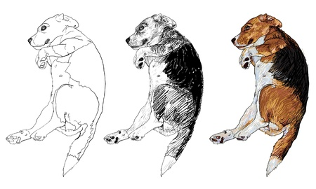overturn: Beagle is laying down in funny pose  Illustration