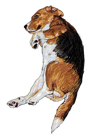 Beagle is laying down in funny pose  Illustration