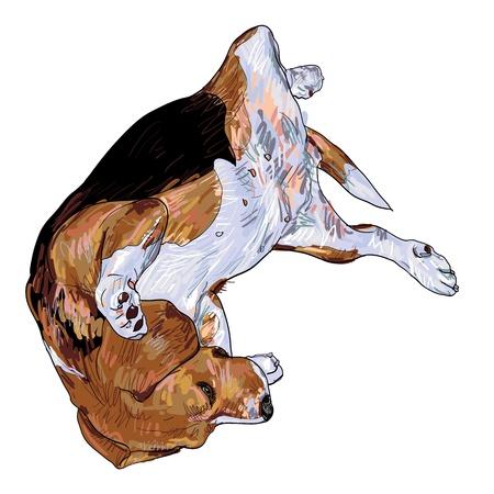 beagle puppy: Beagle es la que se establecen a su vez por la posici?n