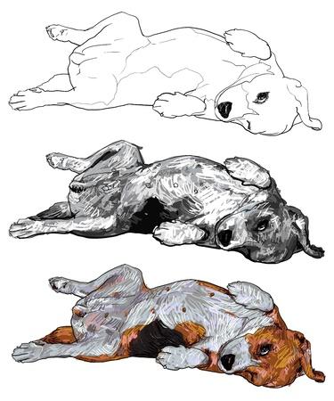 overturn: Beagle si stabilisce in posa divertente eps10, nessun effetto