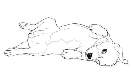 overturn: Beagle is laying down in funny pose  eps10,no effect