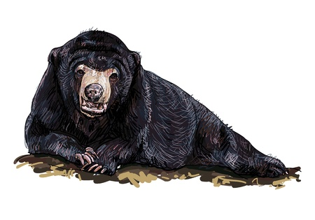 The bear laying down on the rock Vector