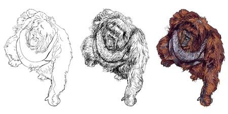 The vector drawing style of orangutan Ilustrace