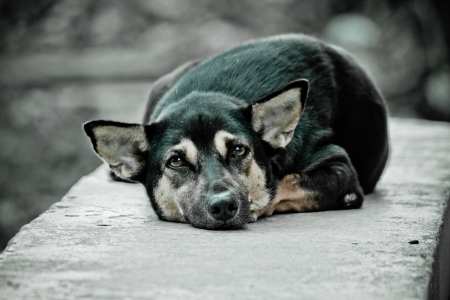 The black dog is resting on concrete wall photo