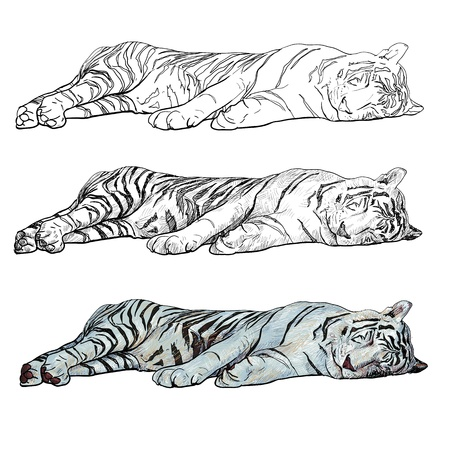 sleeping white tiger  Illustration