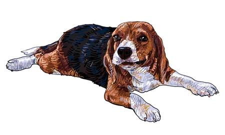 beagle puppy: Beagle est?ugando y masticando algo