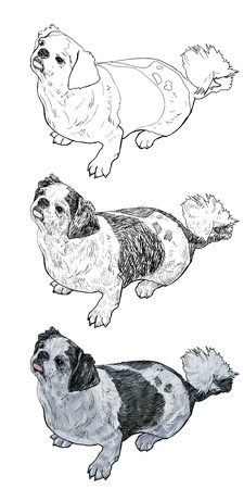 shih tzu: Shihtzu is sitting and look like its waiting for a thing