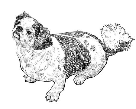 lap dog: Shihtzu � seduto e aspetto come il suo in attesa di una cosa Vettoriali