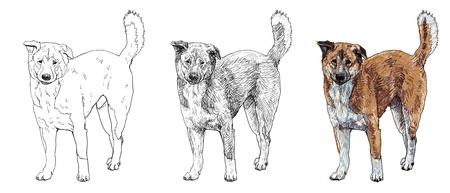 stray: The stray dog