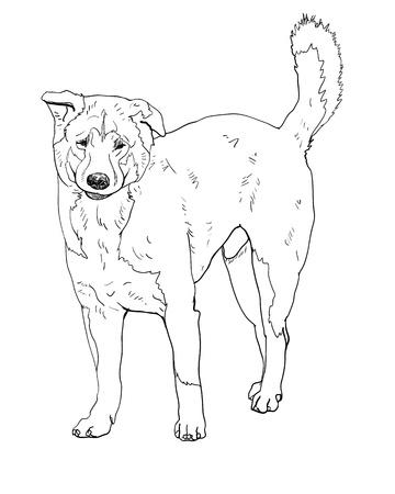 mongrel: The of stray dog Illustration