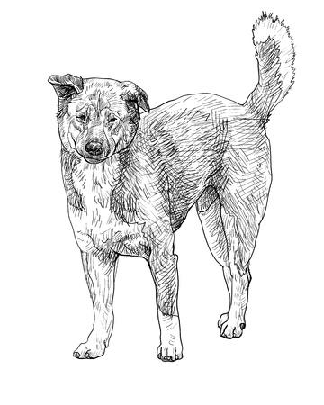 stray: The of stray dog Illustration