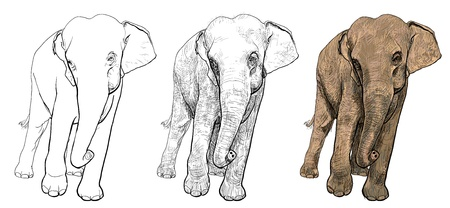 The vector of asia elephant Vector