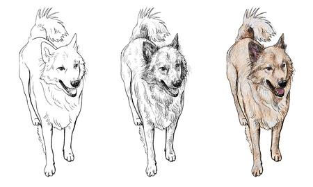 half breed: The half-breed dog