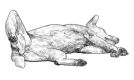legs up: The dog is sleeping on lift its leg up position. Illustration