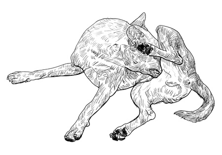 irritate: The brown dog is biting itself.