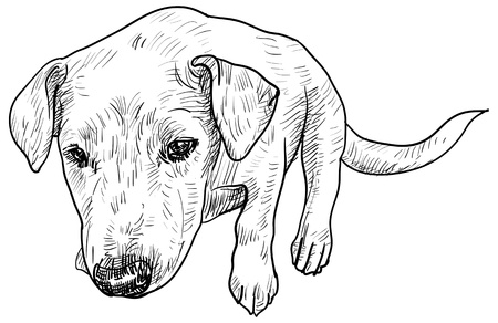 Vector of young dog see from top view