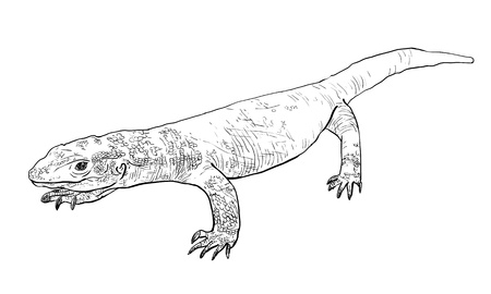 herpetology: The vector of Varanus exanthematicus Illustration