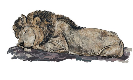 Lion is sleeping on the rock Vector