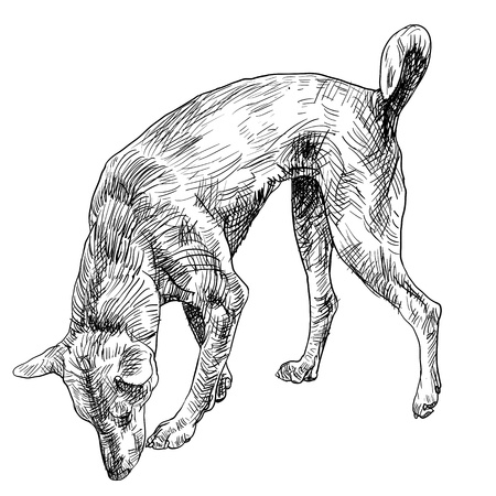 smelling: The brown dog finding something by smelling
