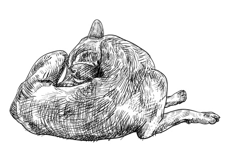 dog bite: Il cane marrone si sta mordendo causa del prurito