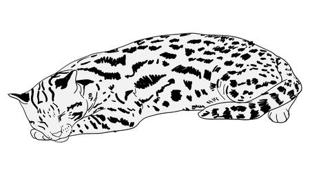 gato dibujo: Vector de reclinación del gato leopardo Vectores