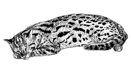 Vector of resting leopard cat