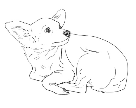 The chihuahua that looking back at something Illustration
