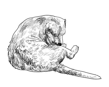 jeuken: Hondje verlichten jeuk door bijten zichzelf