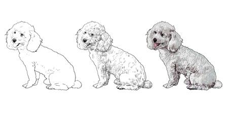 shih: Shihtzu dog is sitting and looking aside Illustration