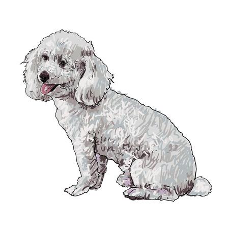lap dog: Shihtzu dog is sitting and looking aside Illustration